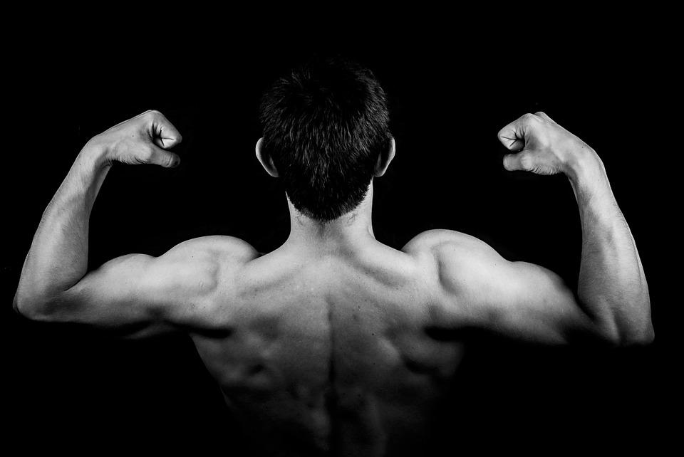 muscles biceps et triceps